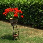 jardin-calme