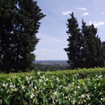 landschaft grune hugel