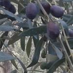 01 italia olive oil