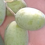 03 aceite de oliva