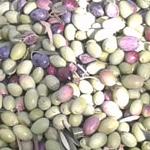 06 genuine olive oil