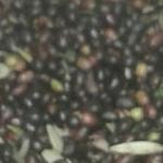 13 olive oil montecarlo