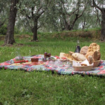 03 montecarlo olive oil tree nature